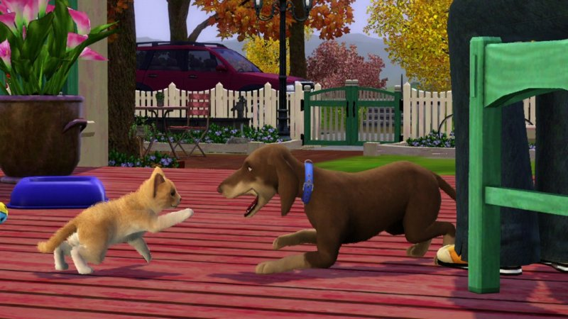 phoca_thumb_l_ts3_pets_announce_cat_dog_play_01